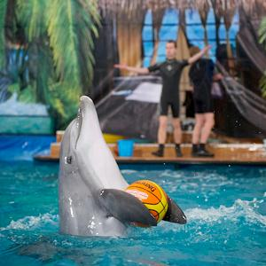 Дельфинарии, океанариумы Байкальска