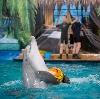 Дельфинарии, океанариумы в Байкальске